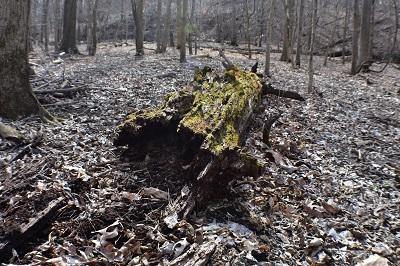 TreeLichen