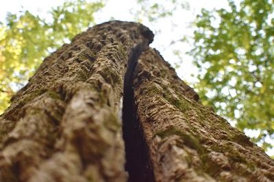TreeSplitinTwo